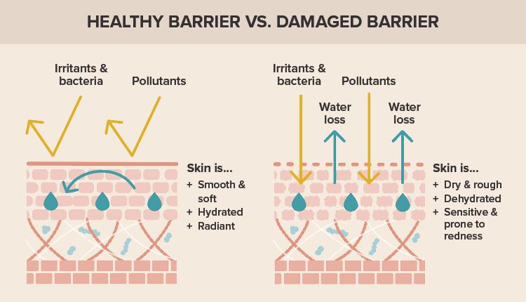 Healthy skin barrier vs. a damaged skin barrier